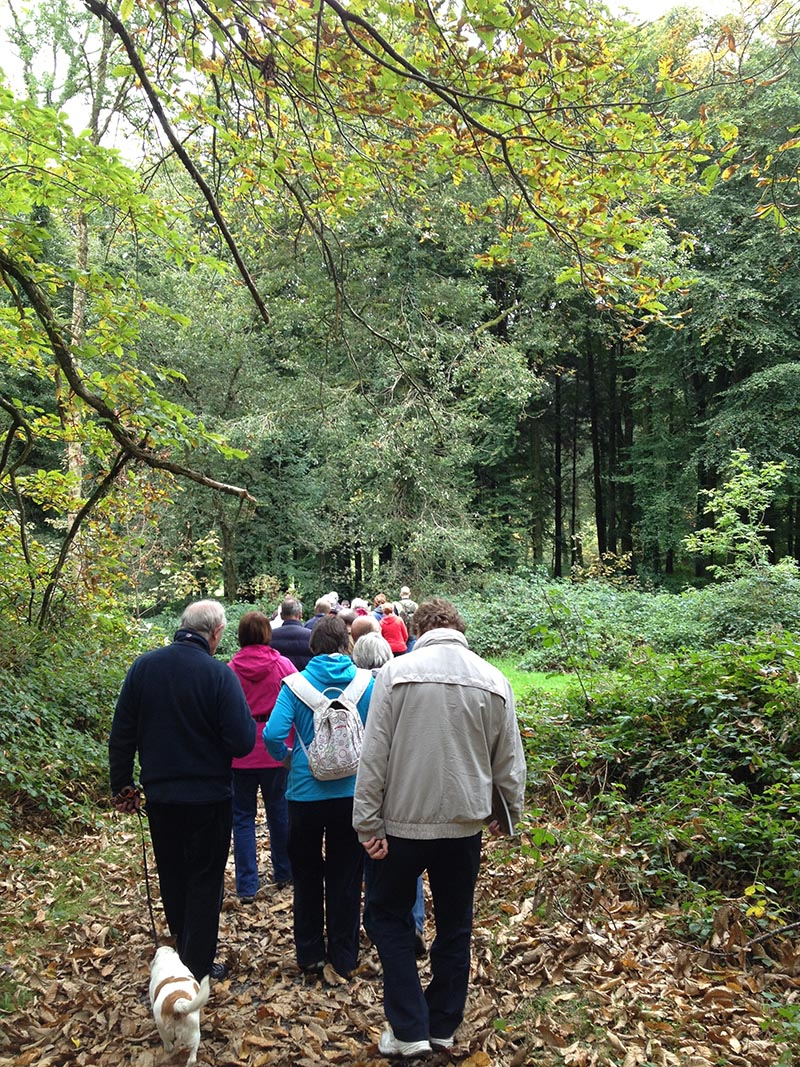 Projects -  Woodlansd For Health Walkers On Trail